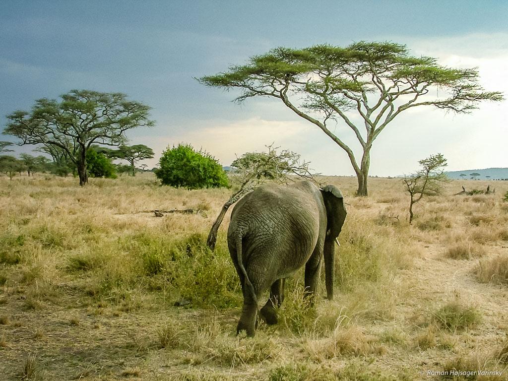 Najväčšie africké korisť
